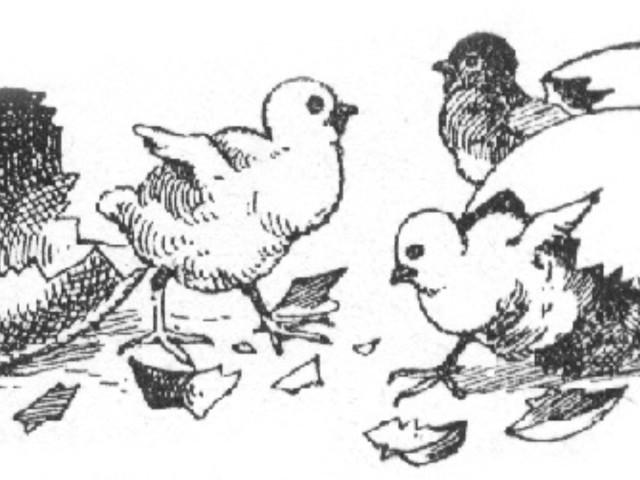 Ouăle şi puişorii – o minunată icoană a învierii – Pr. Iosif Trifa