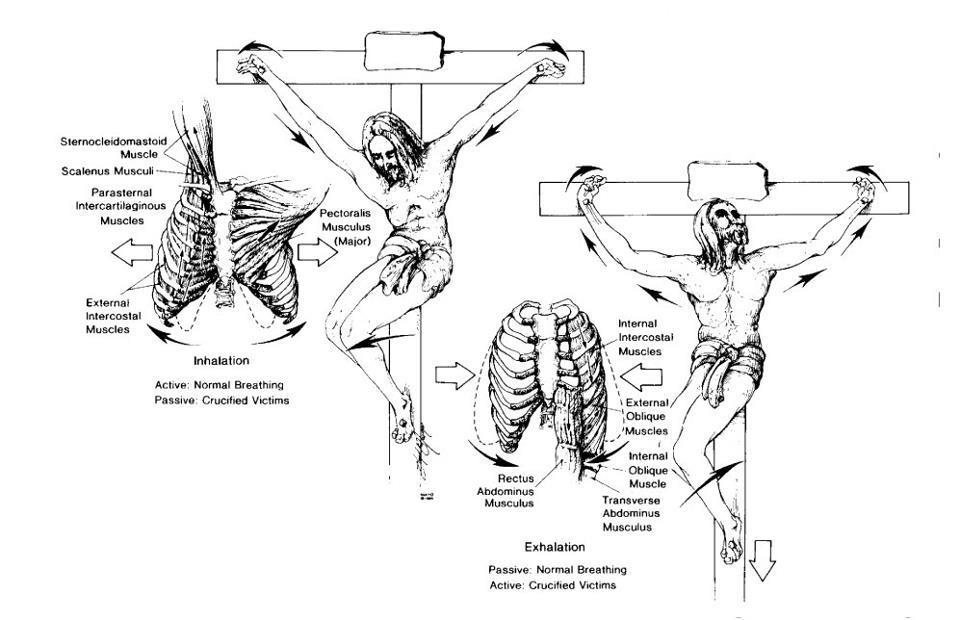 detalii-anatomice-fiziologice-rastignire