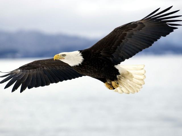 Un pui de vultur – pr. Iosif Trifa