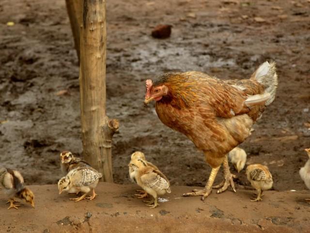 Mama răpită – Traian Dorz