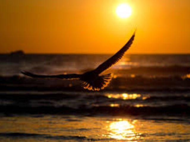 Pe aripi de vultur – Pr. Iosif Trifa