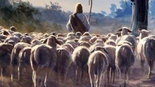 Nu plecați fără călăuză – Ioan Marini