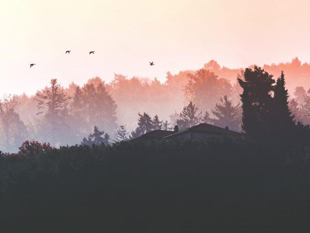 Evanghelia Duminicii a 3-a după Rusalii – Pr. Iosif Trifa