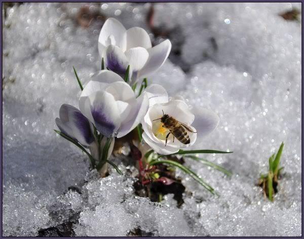 După îngheț, vine dezghețul – Pr. Iosif Trifa