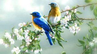 După iarnă, vine primăvara – Pr. Iosif Trifa